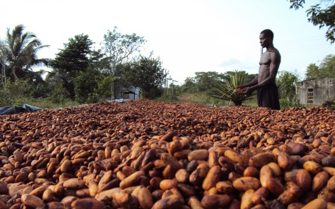 Cocoa sector to get US$2bn